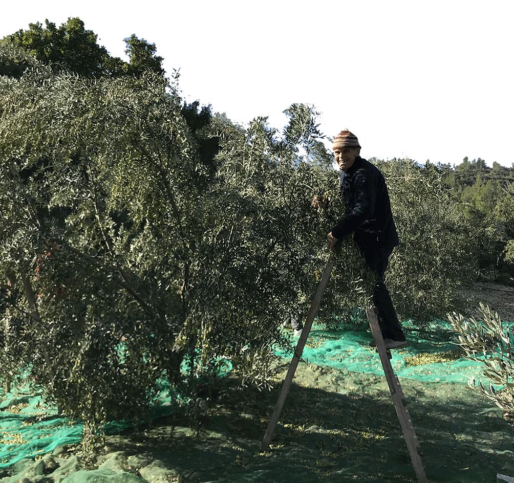 paco olivera